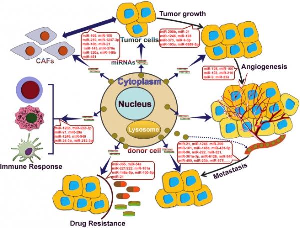 마이크로RNA 기능 요약  (그림제공=티시바이오)